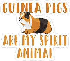 Amazon Com Elizabeth 3 Pcs Stickers Guinea Pig Guinea Pigs Are My Spirit Animal 3x4 Inch Die Cut Wall Decals For Laptop Window Car Bumper Helmet Water Bottle Kitchen Dining