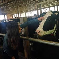 Innovation Center for US Dairy - Abigail Snyder - 2017 | EDF Climate Corps