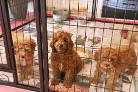 breeding facility