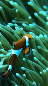 iphone fish wallpapers free