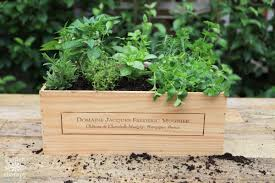 make a wine box herb garden fit for a