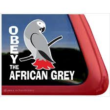 Obey The African Grey High Quality Vinyl Parrot Bird Window Decal Walmart Com Walmart Com