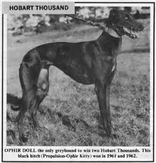 Ophir Doll – Tasmanian Greyhound Hall of Fame
