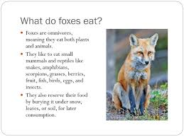 PPT - Foxes PowerPoint Presentation, free download - ID:2800378