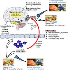 how nutrition impacts cognition and