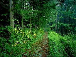 hillspix forest hd wallpapers 1024x768