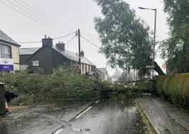 Storm Francis: Newtownabbey roads blocked by fallen trees | Newtownabbey  Times