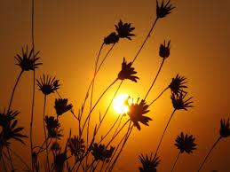 Gambar : pemandangan, bayangan hitam, menanam, langit, matahari ...