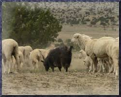 wolf in sheep s clothing 5 tips to