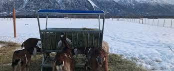 Livestock Feeders Buckets Troughs Alaska Farm Supply