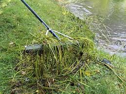 pond rakes weed rake for ponds the