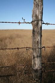 Barbed Wire Fence Old Fences Barbed Wire Fencing Wire Fence