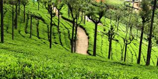 Tea Estate View Point, Ooty (Entry Fee, Timings, Entry Ticket Cost ...