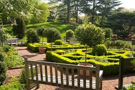 boxwood blight a new menace to the