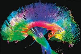 Genes arquitectos del cerebro - Revista Mètode