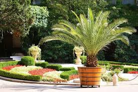pretty palms and cycads for your containers
