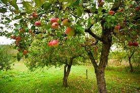 planning a small home orchard co op