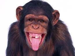 صور قرد مضحك هتموووت من الضحك علي القرود دي دموع جذابة
