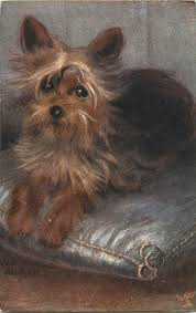 MAUDE WEST WATSON - YORKSHIRE TERRIERS dog on grey cushion, smaller image