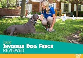 Best Invisible Dog Fence For 2020 In Ground Vs Wireless Compared