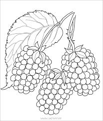 Bộ tranh tô màu hoa quả với nhiều loại hoa và trái cây nhất ...