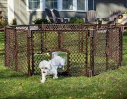 6 Ways To Keep Your Dog In The Yard Without A Fence