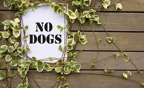 dog repellents that really work 3 ways