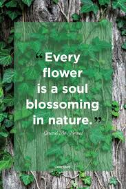 best nature quotes inspirational sayings about nature