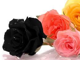 اجمل صور ورد الورد وجمالة والوانة حبيبي