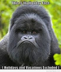 21 undying funny monkey faces images