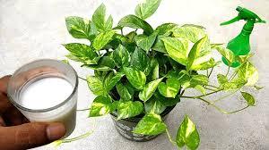 liquid fertilizer for plants