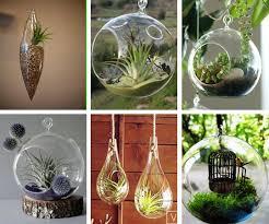 hanging glass terrariums a bubble