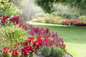 perennial plants for the northeast