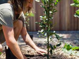 easiest fruit trees to grow in your garden