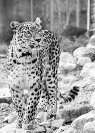 Immagini Belle : bianco e nero, vista, natura, zoo, monocromo ...