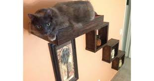 3 floating cat wall cubes 1