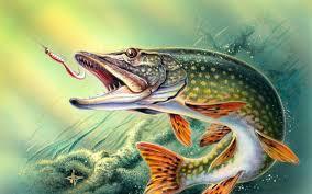 b fishing wallpaper backgrounds ①