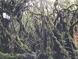 getting enchanted in mossy forest the star online