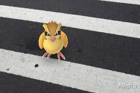 Pokémon Go's best way to level up requires plenty of Pidgey - Polygon