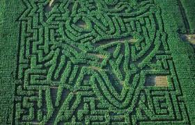 Adrian Fisher, Labirinto, villa Pisani, Stra, Italia | Maze, Adrian, Fisher