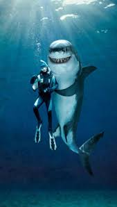 funny shark wallpapers top free funny