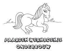 44 Beste Afbeeldingen Van Thema Het Paard Paarden Paard