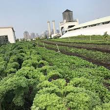 picture of brooklyn grange rooftop farm