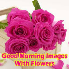 images with flowers good morning wishes