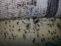 how to make bed bugs e out of hiding