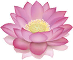 Amazon Com Beautiful Lotus Flower Blossom Pink White Vinyl Decal Sticker Two In One Pack 4 Inches Wide Arts Crafts Sewing