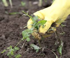 getting rid of weeds in your garden
