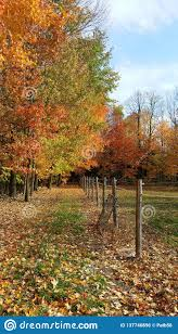 Colourful Trees Beside Horse Paddock With Electric Fence Stock Photo Image Of Color Country 137746896