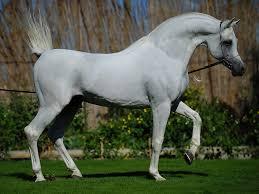 اجمل خيول في العالم صور خيول رائعه و حلوه صباح الورد