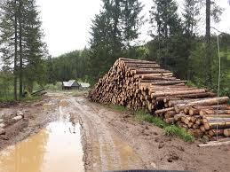Prăpăd în Padis/Parcul Apuseni. Se taie pădurile vechi de 70 de ...